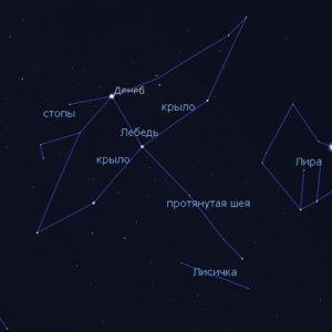 Две небесные птицы — созвездия Лебедя и Орла