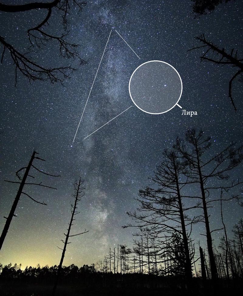 созвездие Лиры на небе